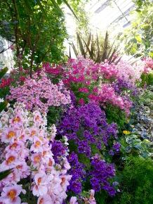 Beautiful specimens of Flora Pinkypurplis